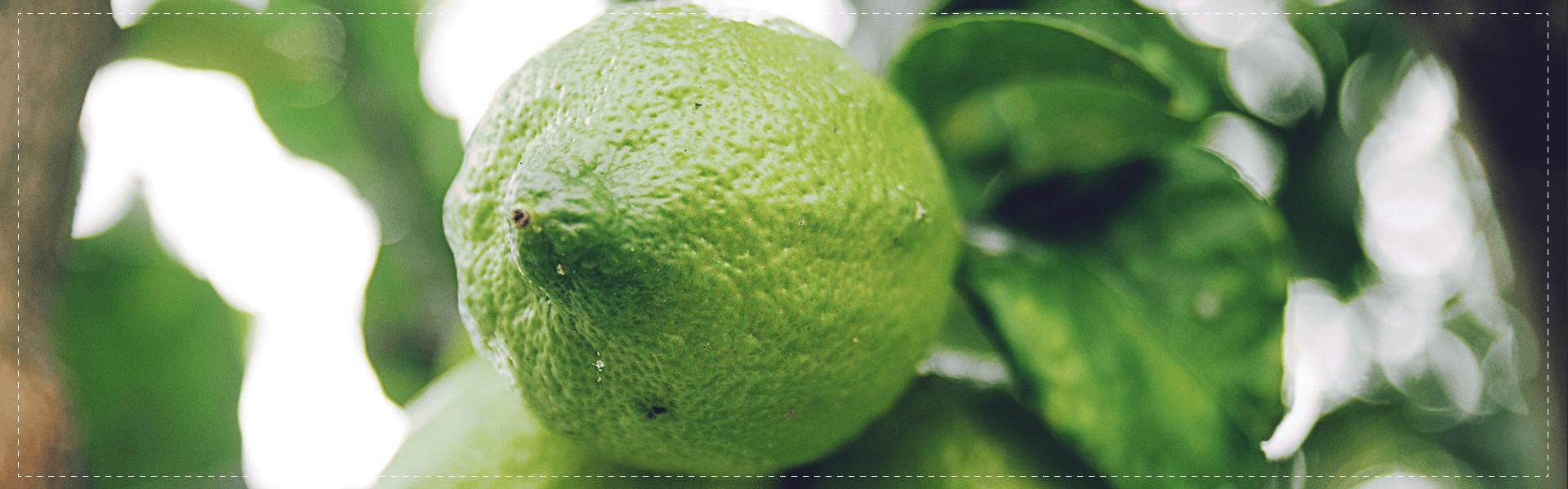 green-limoni-banner